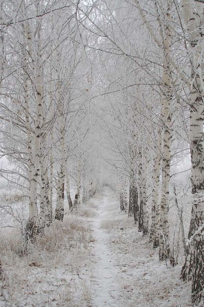 rusia-con-nieve.jpg